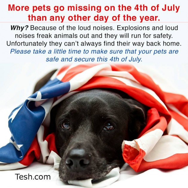 Pet Safety July 4th